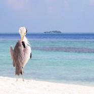 Pourquoi pas les Maldives au sable blanc à perte de vue, mer turquoise?