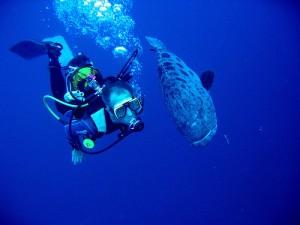 Plongé dans l'Océan Indien