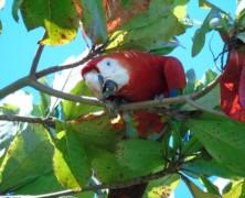 Au Costa Rica, un voyage au bout de l'authenticité, Osa Peninsula
