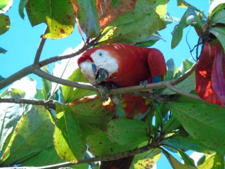 Corcovado Costa Rica - Lapas