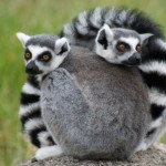 Premier pas à Madagascar, que faire dans la Grande île