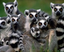 Madagascar, l'ile mosaïque