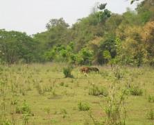Les raisons pour une randonnée au Laos