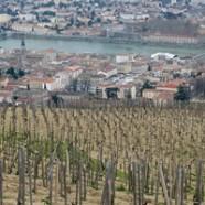 Des vacances autour des vins de la Vallée du Rhône