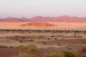 dune namibie