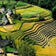 CONSEILS POUR un trekking dans la region de SAPA, VIETNAM