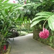 Inspiration d'ailleurs: bienvenue dans mon jardin