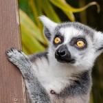 Madagascar, la terre des découvertes