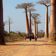 À la découverte des trésors naturels de Madagascar