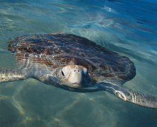 6 meilleurs spots de plongée au Mexique
