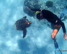 Le snorkeling dans les îles de l'Océan Indien