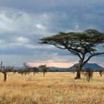 Le ronjo camp : meilleur hébergement dans le Serengeti