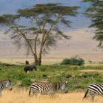 Le Trek Masaï en Tanzanie : un voyage de randonnée