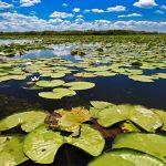 10 choses à savoir sur le Delta du Danube