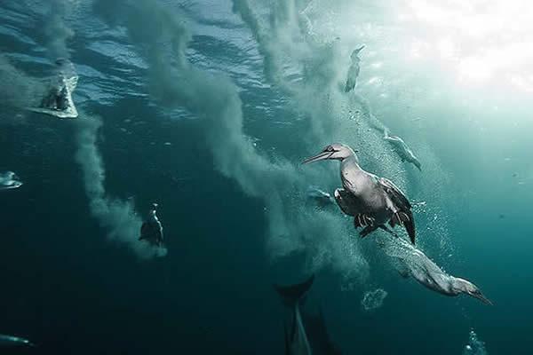 plongée afrique du sud
