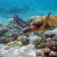 Partir en voyage de plongée en Afrique du Sud: un régal
