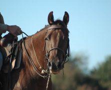 Partir à la découverte d'Alberta à cheval
