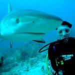 Séjour aux Bahamas : top 5 des activités envisageables