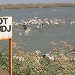 Les incontournables parcs nationaux du Sénégal