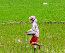 Mai Chau, paradis caché au Vietnam