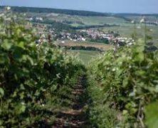 Découvrez Épernay, ville du champagne