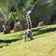 Voyage à Madagascar et ses bons plans