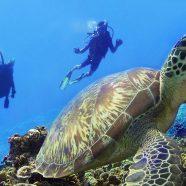 3 raisons pour plonger à Gili Trawangan
