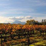 Séjour touristique dans le Vignoble La Londe Les Maures