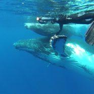 Comment se faire approcher par les dauphins ou les baleines ?