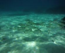 Pourquoi se mettre à la plongée sous marine cet été ?