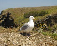 Les incontournables d'un voyage en Bretagne