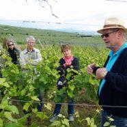 Voyage au cœur du vignoble alsacien