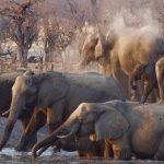 Choisir le parfait parcours safari pour vous