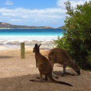 Australie, une opportunité de voyage mais aussi de stage