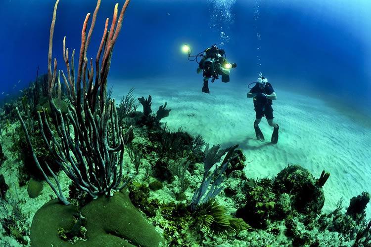 Faire de la plongée au costa rica