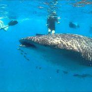 Partir à la découverte de Nosy-be, un paradis dans l'océan indien