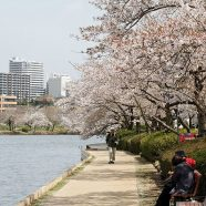 Mito et Hitachi, deux villes incontournables à visiter à Ibaraki