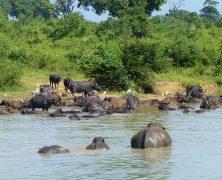 À la découverte des animaux du Sri Lanka