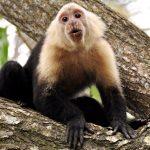 Road-trip sur la côte est de Costa Rica : les étapes conseillées