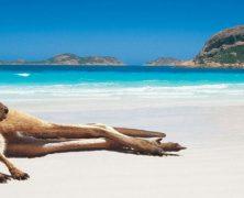Partir en vacances en Australie : à quoi penser ?