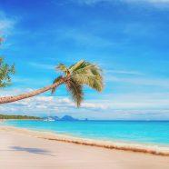 Louez une voiture lors de votre prochain séjour en Martinique
