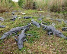 Escapade en Floride: Les Everglades en famille pour une belle aventure