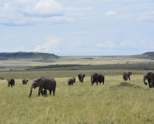 Partir au Kenya à la découverte de ses principales attractions
