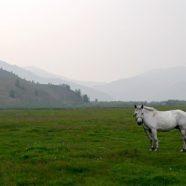 La Mongolie, une destination touristique de choix