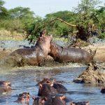 Les sites incontournables à visiter pendant un safari en Tanzanie