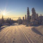 Comment randonner avec des chiens de traîneau en Laponie ?