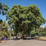 3 attraits touristiques dignes d'intérêt à découvrir à Mendoza