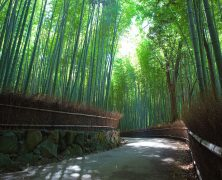 Un clin d'œil depuis Arashiyama
