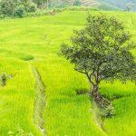 La route entre Chiang Mai et Sukhôtai