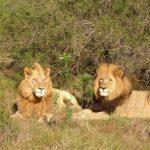 Comment préparer son safari en Sud Afrique ?